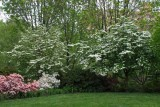 The Fairmount Park Azalea Garden (60)