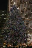 Rockefeller Tree at Night