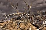 Death Valley Dunes Mesquite Tree