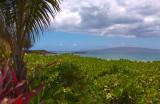 Kamaole Beach Park 3 Number 1 - Flora and Islands