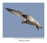 sea_birds