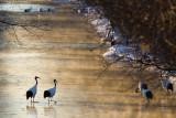 Cranes revisited