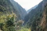 Entering Tibet across the Pine Forests of Zhangmu