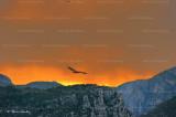 vulture gorges du Verdon 2303ww.jpg