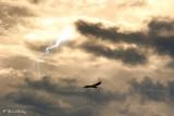 vautour gorges du verdon 2049F2.jpg