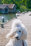 Bonnie in Grisslehamn on Midsummer Day