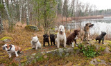 20/11 Groupshot from todays Doggie-meetup