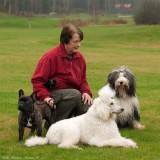 Nice dogs! Sören, Bonnie & My