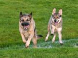 Whohoo!! Runtastic doggie-meetup today