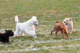Oh dear! Bonnie and Rika don´t get along very well off leash.