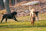 Jago, chasing girls