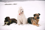 Groupshot from dogwalk today. A snowy one!