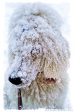VERY snowy dogwalk today.