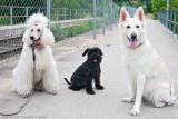 Bonnie and her buddies