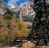 Yosemite Golden Leafs