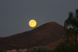 A yellow Blue Moon