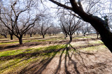 Winter Day in the Orchard