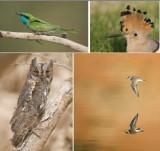 AVES - Birds (class): 357 species