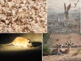 MAMMALIA - Mammals (class): 19 species