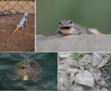 REPTILIA - Reptiles (class): 36 species