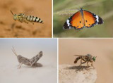 INSECTA - insects (class): 511 species