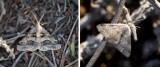 Geometridae (family): 11 species