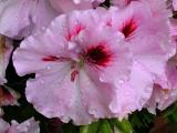 Flower 01.jpg