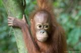 Malaysia - Borneo