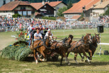 Course de chars à 4 chevaux