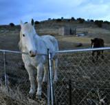 Horses at Dusk on American Road _DSC4945.jpg