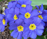 Trimmers flowers P1050434.jpg