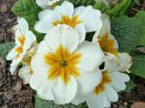 Trimmers flowers P1050442.jpg
