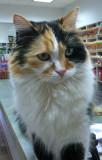 iPhone photo of Alameda Pet Hospital Cat named Summer IMG_0029.jpg