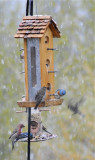 birds at our feeders _DSC7160.jpg