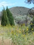 Typical Pocatello Summer Scene P1060314.jpg