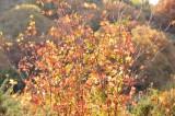 City Creek autumn scene _DSC1550.jpg