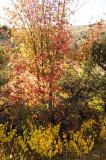City Creek autumn scene _DSC1586.jpg