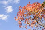 City Creek Autumn Scene _DSC1588.jpg