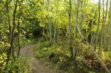 City Creek Trail _DSC1534.jpg