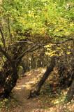 City Creek Trail _DSC1557.jpg