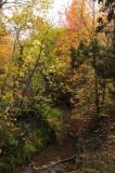 City Creek Autumn Scene Pocatello _DSC1805.jpg