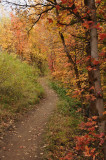City Creek Trail in Autumn _DSC1819.jpg