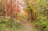 City Creek Trail Sign Autumn Scene _DSC1810.jpg