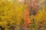 Fall Foliage at City Creek in Pocatello _DSC1977.jpg