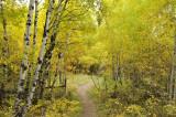 Fall Foliage on City Creek Trail in Pocatello _DSC1834.jpg