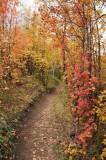 Fall Foliage on City Creek Trail in Pocatello _DSC1929.jpg