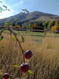 Harvest Time at Chinese Peak IMG_1865.jpg