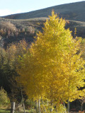 Pocatello Area Country Autumn Scene - from West Buckskin Road - IMG_0234.jpg