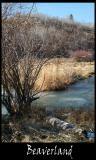 Beaverland DSCF0344.jpg