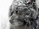 Der Schneehund P1020111.jpg